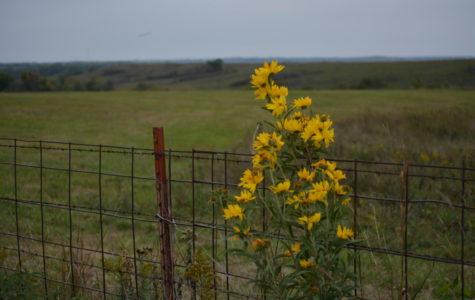 Kansas Farmland